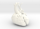 Paediatric Heart in White Strong & Flexible Polished
