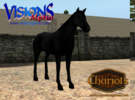 Horse Ultra Black in Full Color Sandstone