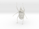 Goliath Beetle solid filigree - 10cm in White Strong & Flexible