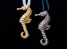 2013 seahorse 01_2.5in in Polished Gold Steel