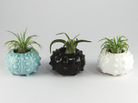 Succulent Sea Urchin Air Planter