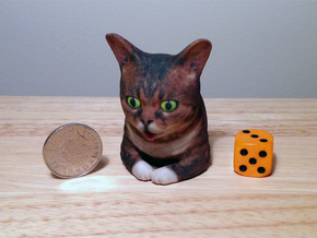 Lil Bub look-a-like in Full Color Sandstone