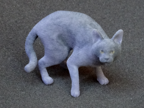 Fearing Gray Chartreux in Full Color Sandstone