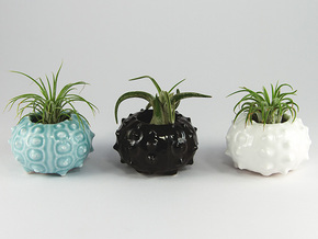 Succulent Sea Urchin Air Planter in Gloss Celadon Green Porcelain