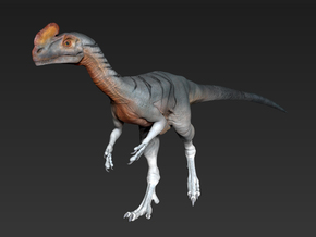 Guanlong middle size in White Strong & Flexible
