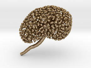 Metal Kidney Ureteric Tree (Mountable) in Polished Gold Steel