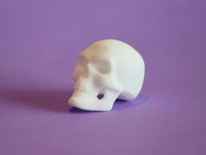 3D Printed Skull - Small in White Strong & Flexible Polished