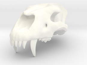 Homotherium skull, maxilla in White Strong & Flexible Polished
