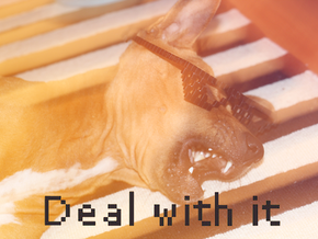 DEAL WITH IT - shades in Black Strong & Flexible
