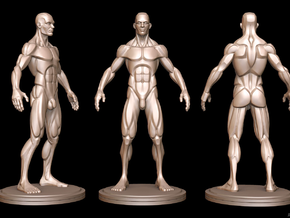 Idealized Male Ecorche Simplified V2 in White Strong & Flexible
