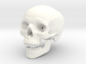 Human Skull -- Small in White Strong & Flexible Polished