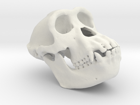 Chimpanzee skull - 77 mm in White Strong & Flexible