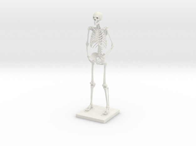 "6"" Desktop Skeleton 3d printed"