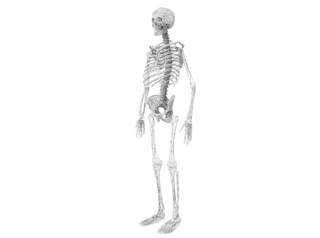 Life Size Poly Chest and Shoulders - Skeleton 3d printed 6ft. Full Skeleton in White - All parts available in store