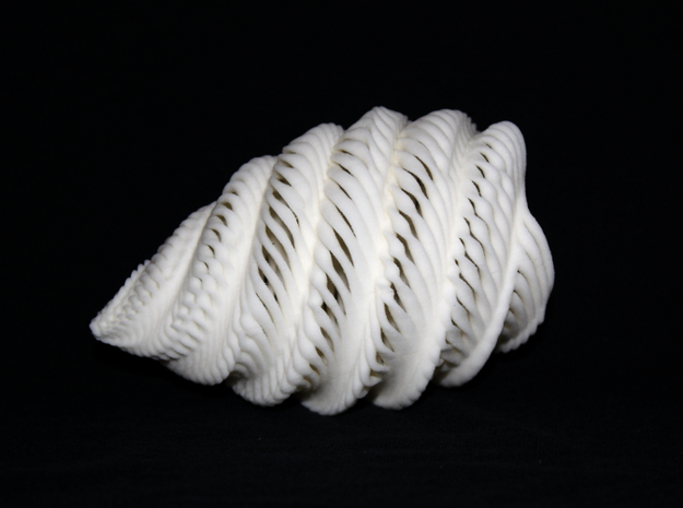 Natural Twisted Shell 3d printed