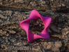 pentagonal moebius surface 3d printed Version in Hot Pink Strong & Flexible Polished