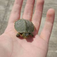 Turtle_Unlimited