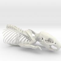 OsteoPrinters