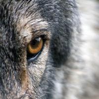 Spirit_Animals