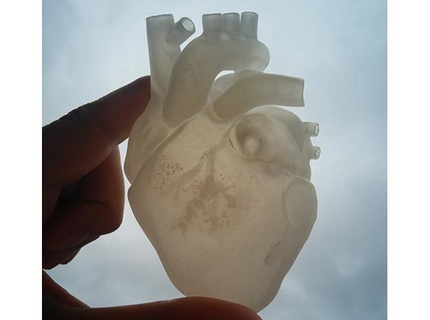 Anatomical Heart in Smooth Fine Detail Plastic