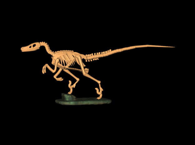 Dinosaurs Story Velociraptor Skeleton Full Color  in Smooth Fine Detail Plastic