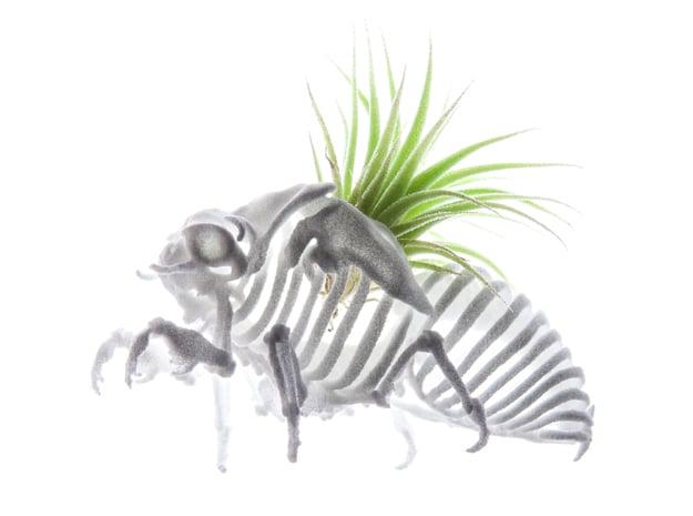 Cicada Nymph Skeleton in White Natural Versatile Plastic