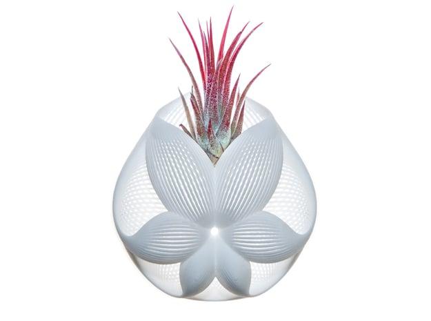 Bulbophyllum Simplex Planter in White Natural Versatile Plastic