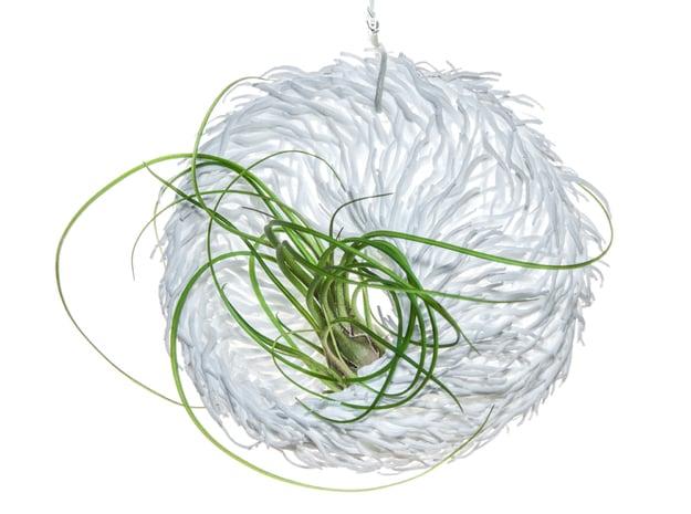 Bulbophyllum Mobius Planter in White Natural Versatile Plastic