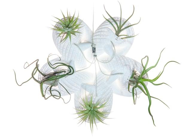 Bulbophyllum Astrum Planter in White Natural Versatile Plastic