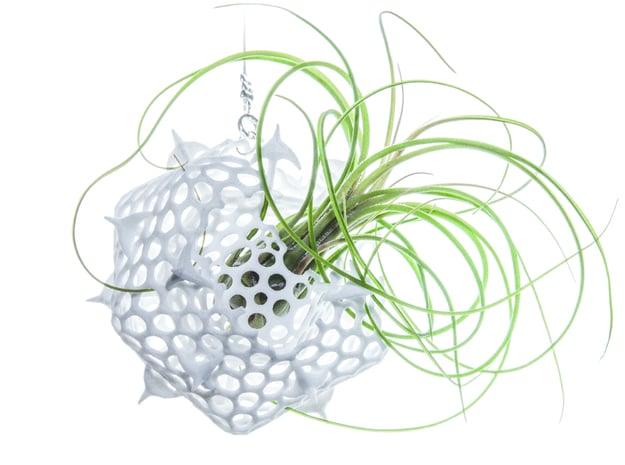 Radiolaria Platonica Planter in White Natural Versatile Plastic