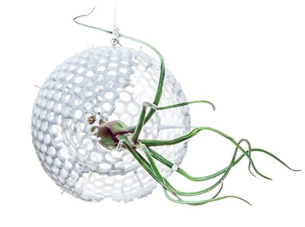 Radiolaria Geodesica Planter in White Natural Versatile Plastic