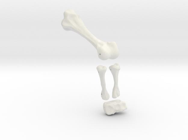 Komodo Left Leg Back 1:5 Scale in White Natural Versatile Plastic