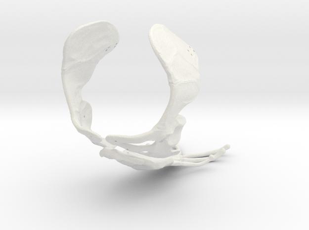 Komodo Sternon and Scapulas 1:5 Scale in White Natural Versatile Plastic