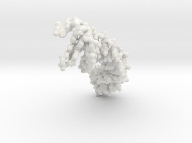 DNA - Lac Repressor Binding Site - all atom in White Natural Versatile Plastic