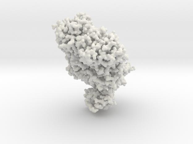 Lac Repressor Bound to DNA - All atom in White Natural Versatile Plastic