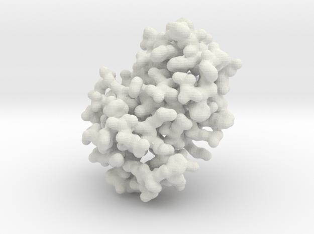 Human Hemoglobin - Monomer, all atom in White Natural Versatile Plastic