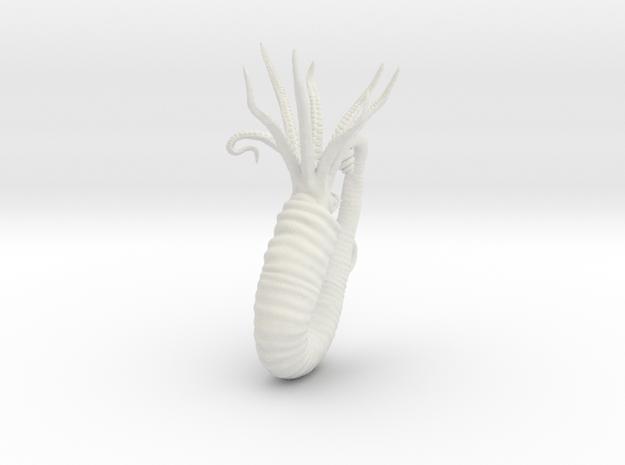 Heteroceras in White Natural Versatile Plastic