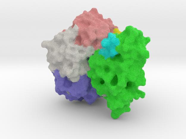 Cholera Toxin Large in Full Color Sandstone