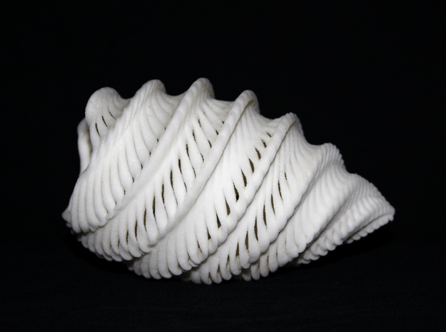 Natural Twisted Shell in Natural Sandstone