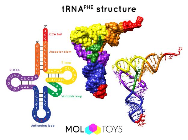Transfer RNA - 10 Million X in Full Color Sandstone