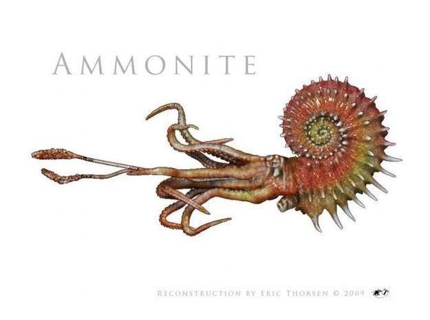 Ammonite 8cm in Smooth Fine Detail Plastic
