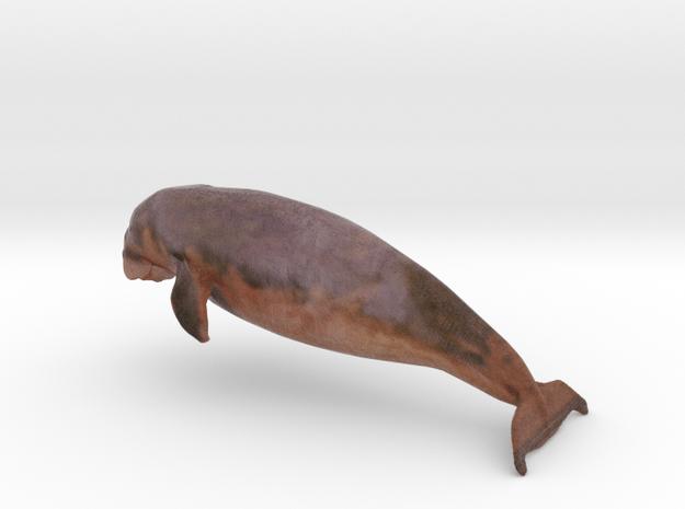 ANIMAL MANATI in Full Color Sandstone