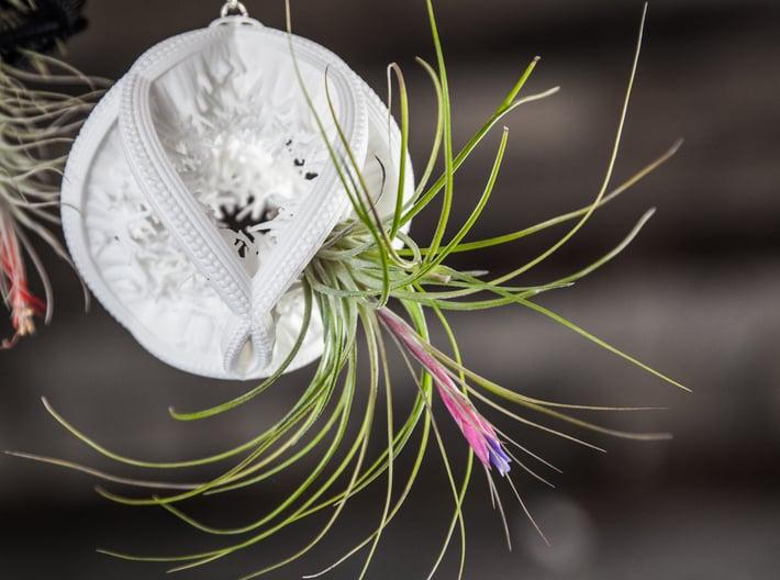 Radiolaria Papillae Planter 3d printed Tillandsia species: T. stricta