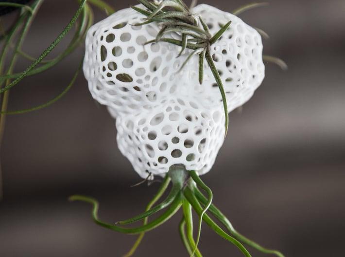 Radiolaria Tetrahedra Planter 3d printed Tillandsia species: T. bulbosa and T. bandensis