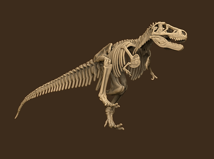 Tyrannosaurus Skeleton Sue 40 cm long. 3d printed