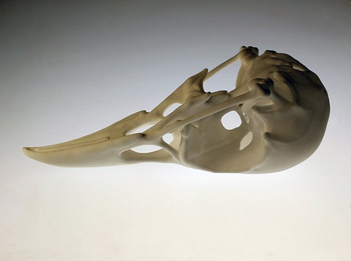 Bird Skull - Macro 3d printed