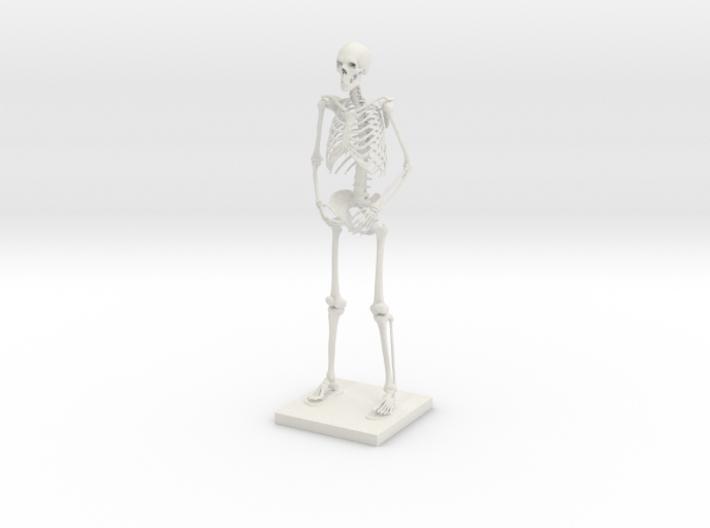 """10"""" Desktop Skeleton 3d printed"""