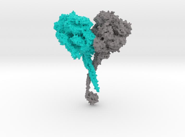 Dynein 3d printed