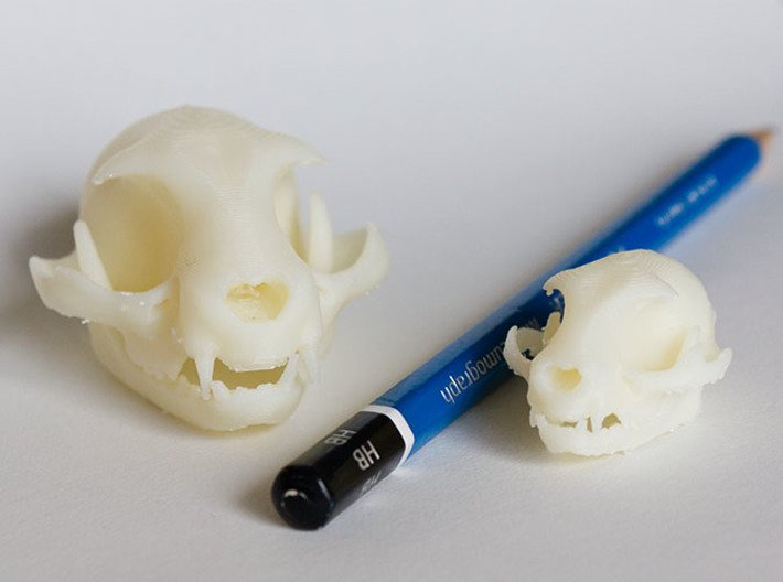 """Mini Cat Skull Sculpture 3d printed Mini and Standard model with an HB pencil for scale. Printed on """"MakerBot: The Replicator"""" at the local college. Shapeways prints should look even better since they use high resolution printers."""