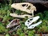 Dinosaur Skull 30mm pendant 3d printed Photo show larger 5cm version in Stainless Steel (bottom left)